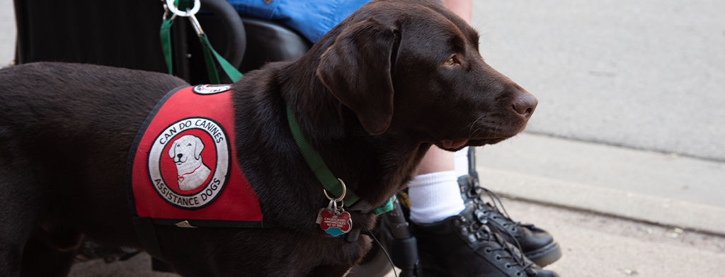 Can Do Canines assistance dog
